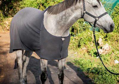 horse blankets fleece